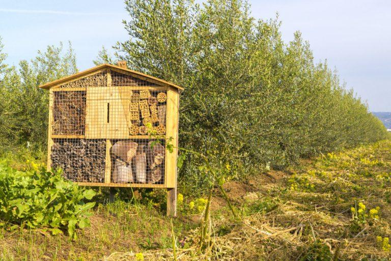 Hoteles para insectos entre almendros y olivares en Cortijo el Puerto