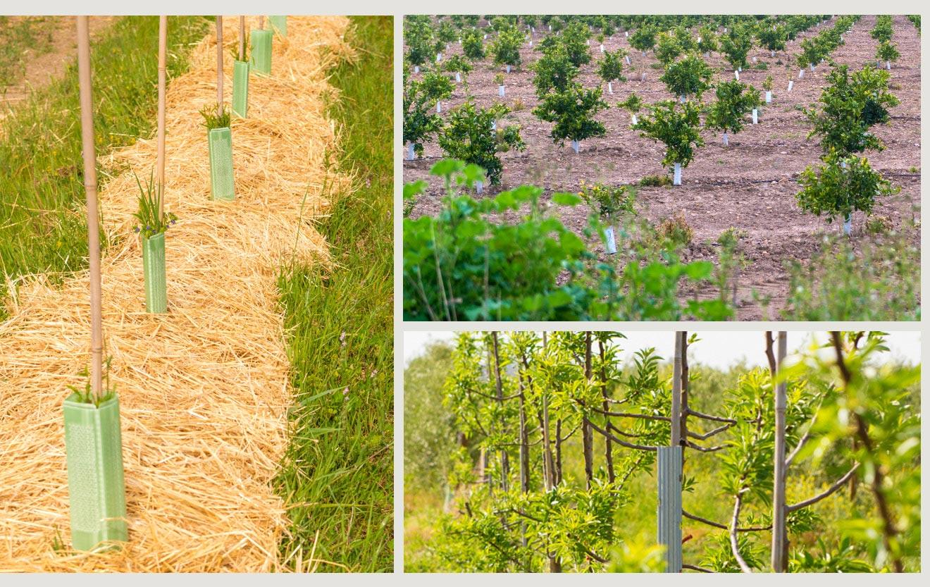 crop diversification biodynamic organic farm cortijo el puerto