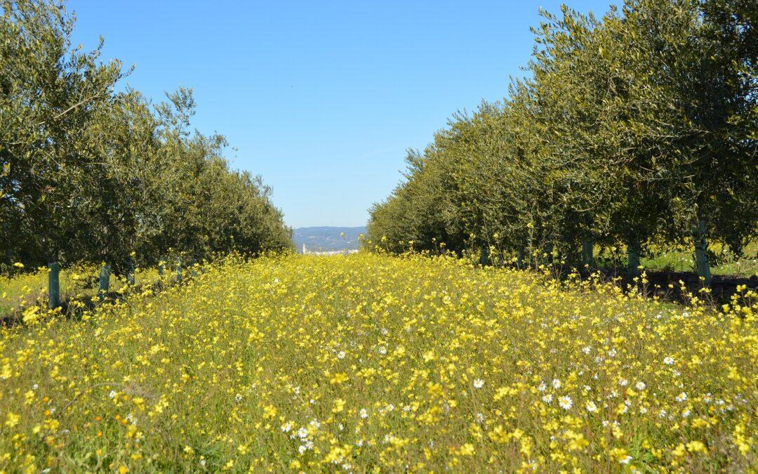 Aula Agroecológica sobre el Manejo de Cubiertas en Cultivos Leñosos. Biodiversidad y Fauna Auxiliar
