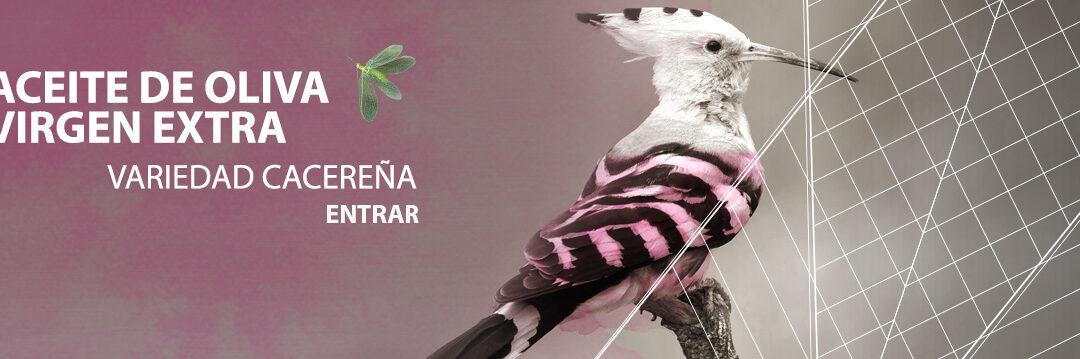 Manzanilla Cacereña, nuestro AOVE ecológico extremeño, coqueto y frutado