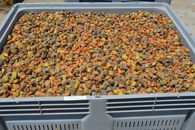 Cortijo el Puerto organic almonds certified