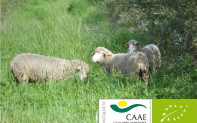Cortijo el Puerto certifica en Ecológico con el CAAE su ganadería ovina