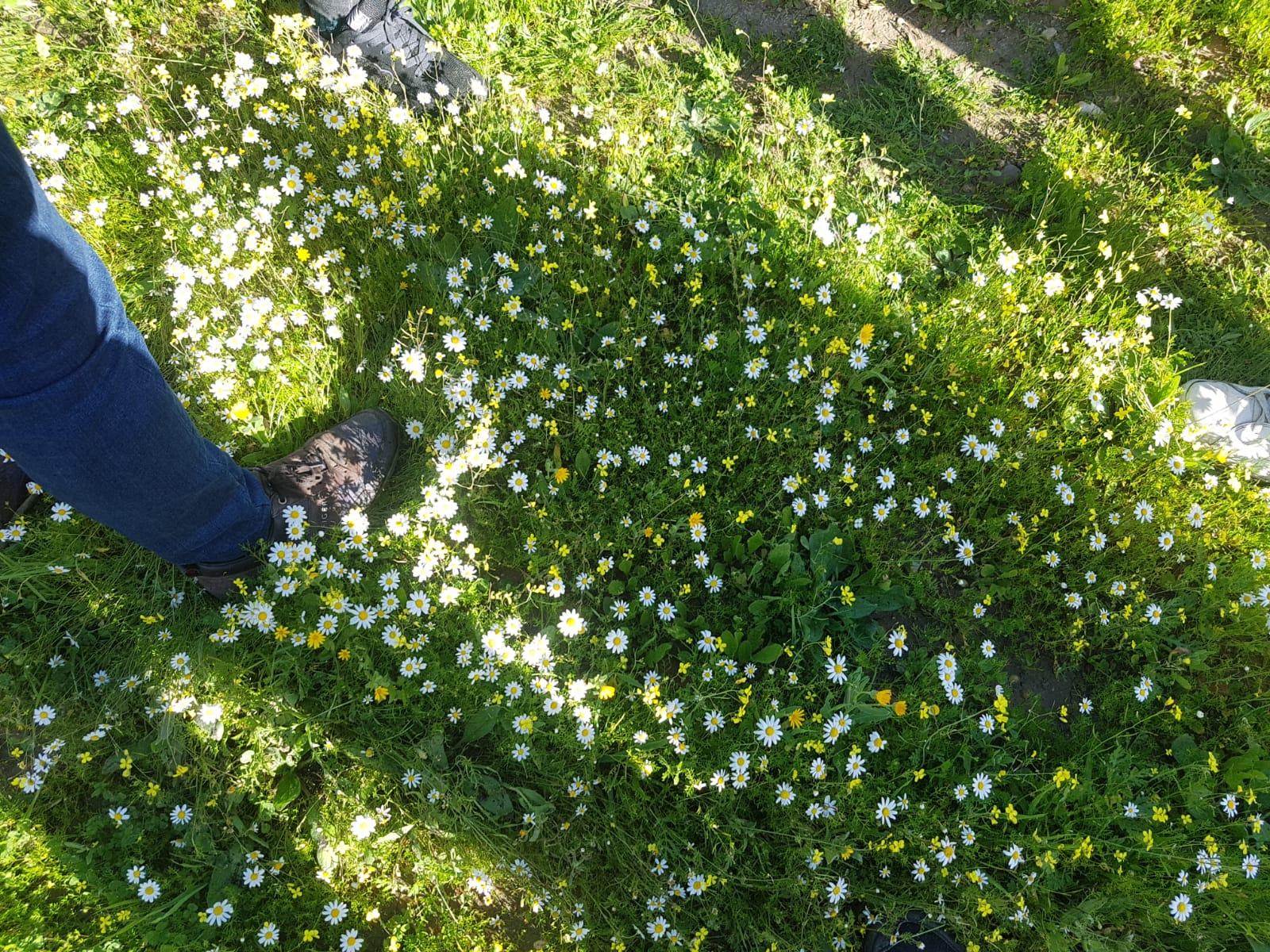 Por un suelo vivo: granja agricultura ecologica y biodinamica cortijo el Puerto