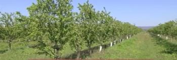 Canal Sur Informativos: Agricultura de Precisión y Ecológica en Sevilla: Drones para controlar estado de cultivos