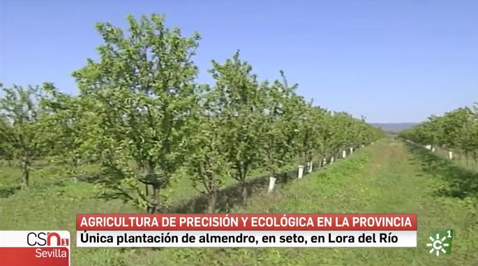Canal Sur Informativos 29_03_2019