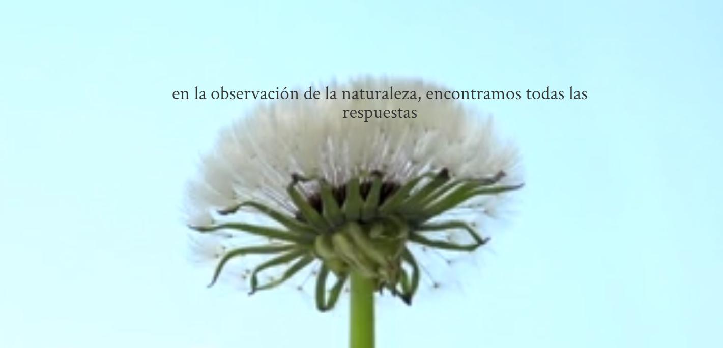 cortijoel puerto_ecologia y biodinamico_2019