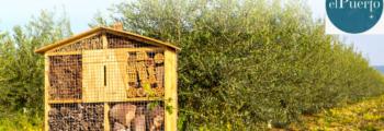 Canal Sur Noticias: Hoteles para insectos, increíble pero cierto