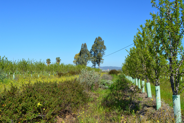 vegetation cover, biodiversity & almendro cubierta vegetal ecologico biodinámico cortijo el puerto