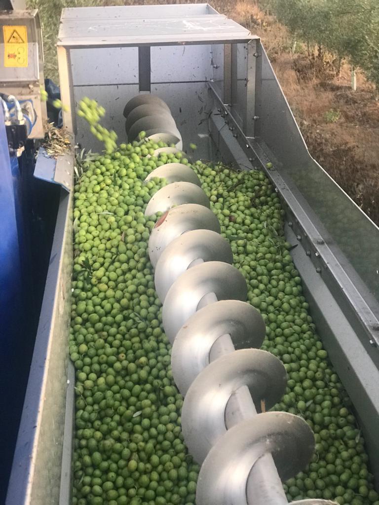 organic biodynamic olive cortijo el puerto