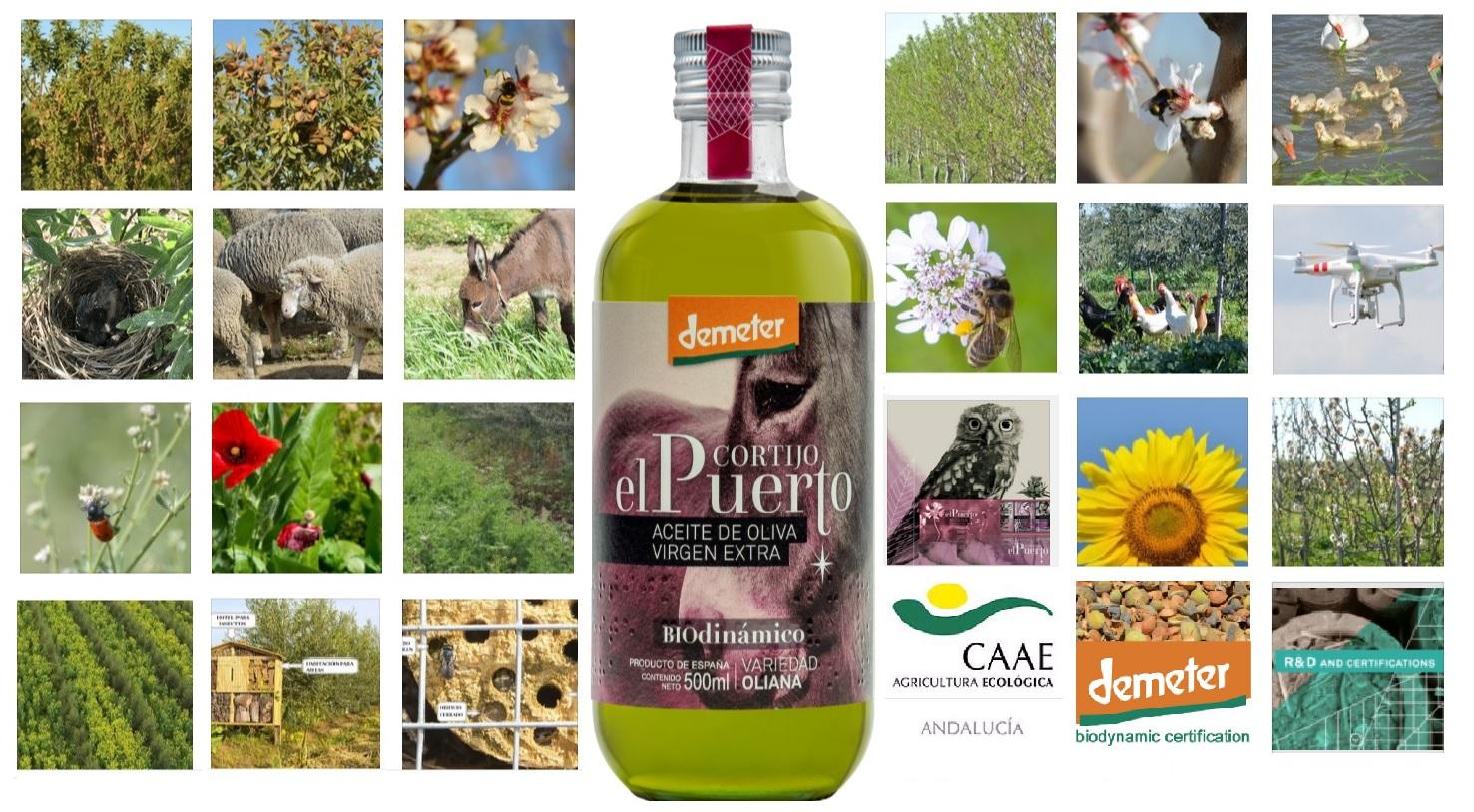Organic biodynamic EVOO Cortijo el Puerto Biodiversity