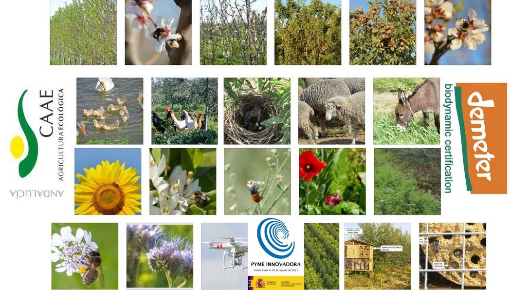 Agricultura Ecológica y biodinámica 4.0_Cortijo el Puerto_ 2019_3