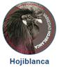 aceiteecologico biodinamico hojiblanca cortijo el puerto