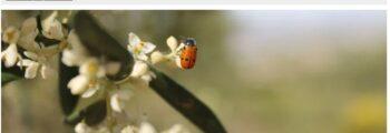 elperiodicodelospueblos.es: Jornada sobre Producción Ecológica en la Escuela Universitaria de Osuna