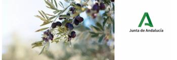 Europa Press: Ifapa y Cortijo el Puerto se unen para investigar cultivos ecológicos del olivar