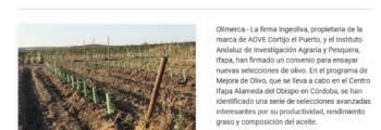 Olimerca:  El cultivo biodinámico ya es posible en los olivares en seto: Cortijo el Puerto colabora con el Ifapa en la selección de nuevas variedades