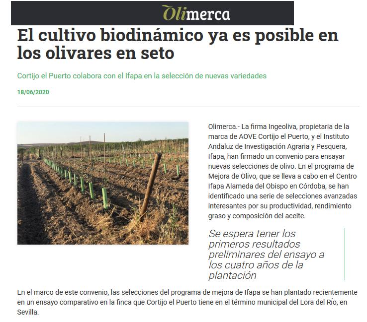 Olimerca _18 _junio_2020_cultivo biodinamico en olivares seto _Cortijo el Puerto_IngeOliva