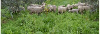 La Fertilidad de la Tierra: «Abonos verdes, experiencias a pie de tierra». Entrevista a Cortijo el Puerto