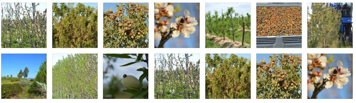Almendro ecologico biodinamico Flora_Fauna_Habitat