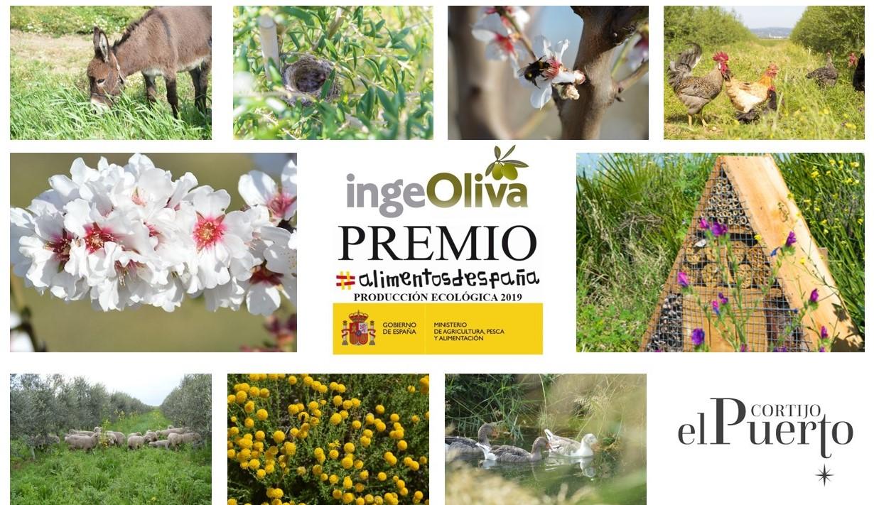 Premio alimentos de España Producción ecológica IngeOliva Cortijo el Puerto