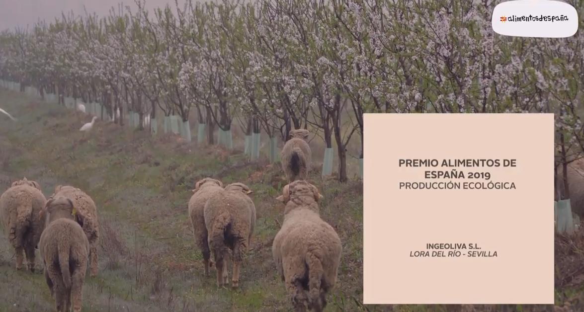 Premio alimentos de españa 2020_IngeOliva_Cortijo el Puerto_ producción ecológica