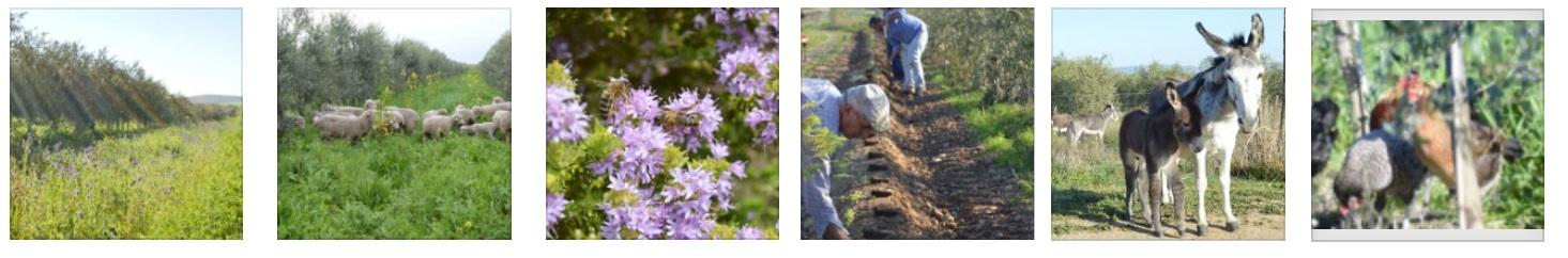 AOVE ecologico biodinamico Cortijo el Puerto Oliana Organic Farm 2