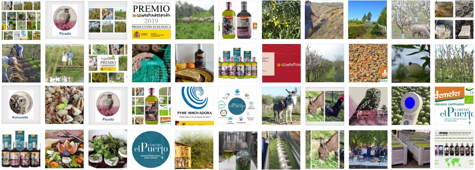 AOVE ecologico biodinamico Cortijo el Puerto Organic Farm