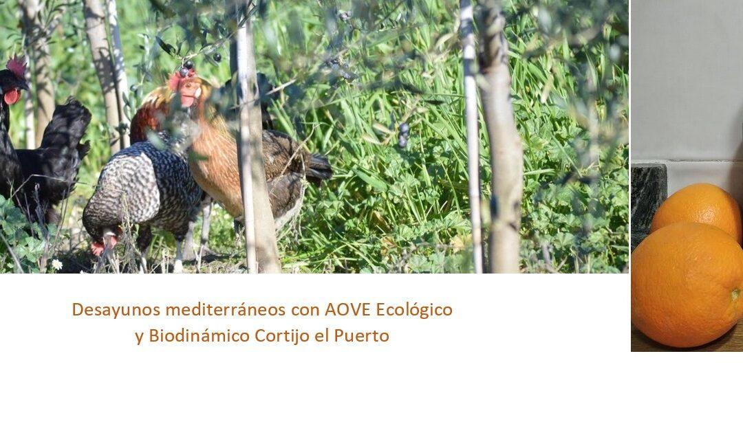 Desayuno saludable y mediterráneo con Aceite de Oliva Virgen Extra Ecológico y Biodinámico: recetas Cortijo el Puerto