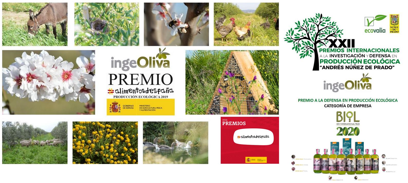 Aceite oliva AOVE Ecologico biodibanico alimentos saludables cortijo el Puerto Awards premio alimentos de España IngeOliva