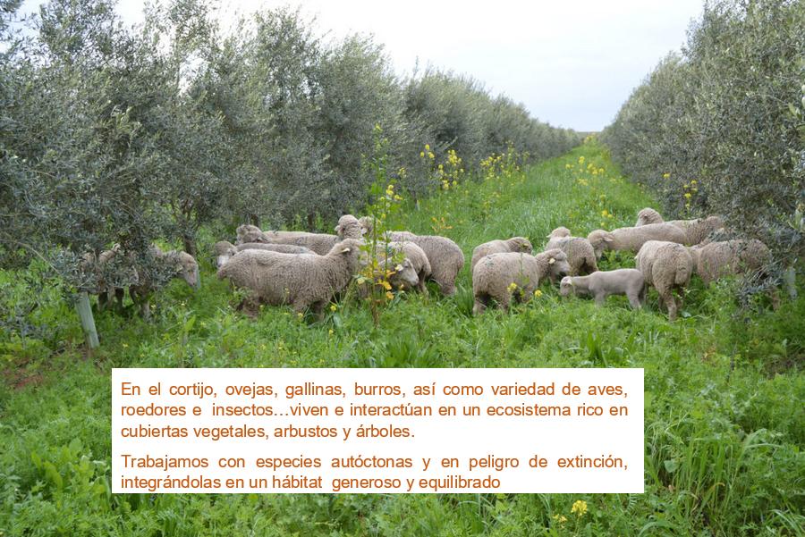 Suelo biodinamico salud ambiental Cortijo el puerto ecologico demeter granja integra ganadería y agricultura