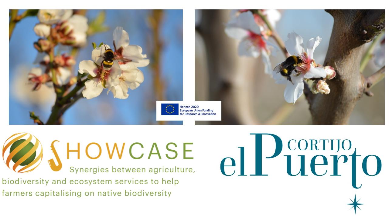 Cortijo el Puerto agricultura ecologica de precision Showcase synergies pro biodiversity head