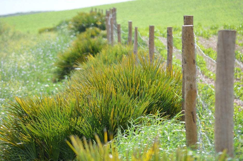 ecology and Innovation biodynamic project Cortijo el Puerto Spain