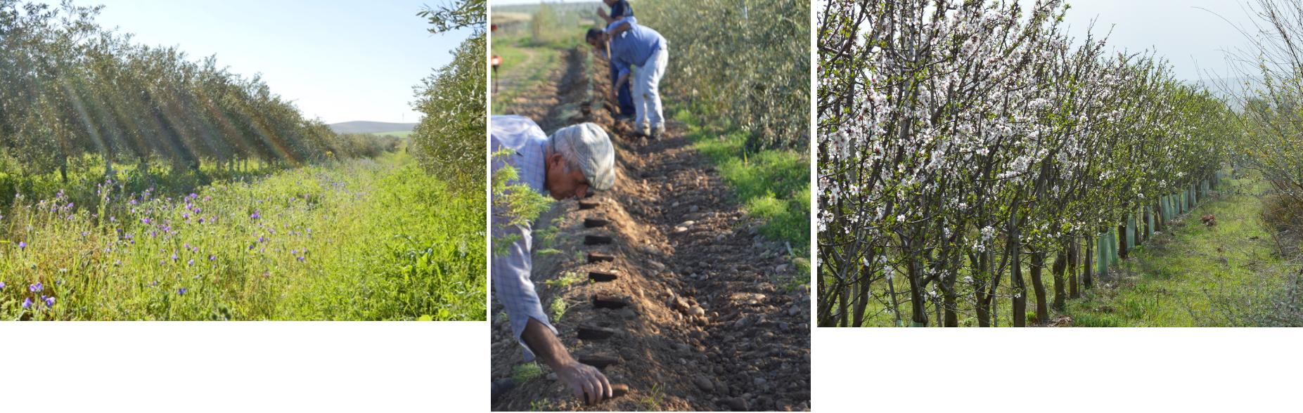 Biodynamic & organic farm cortijo el puerto spain healing supporting biodiversity environmental awareness