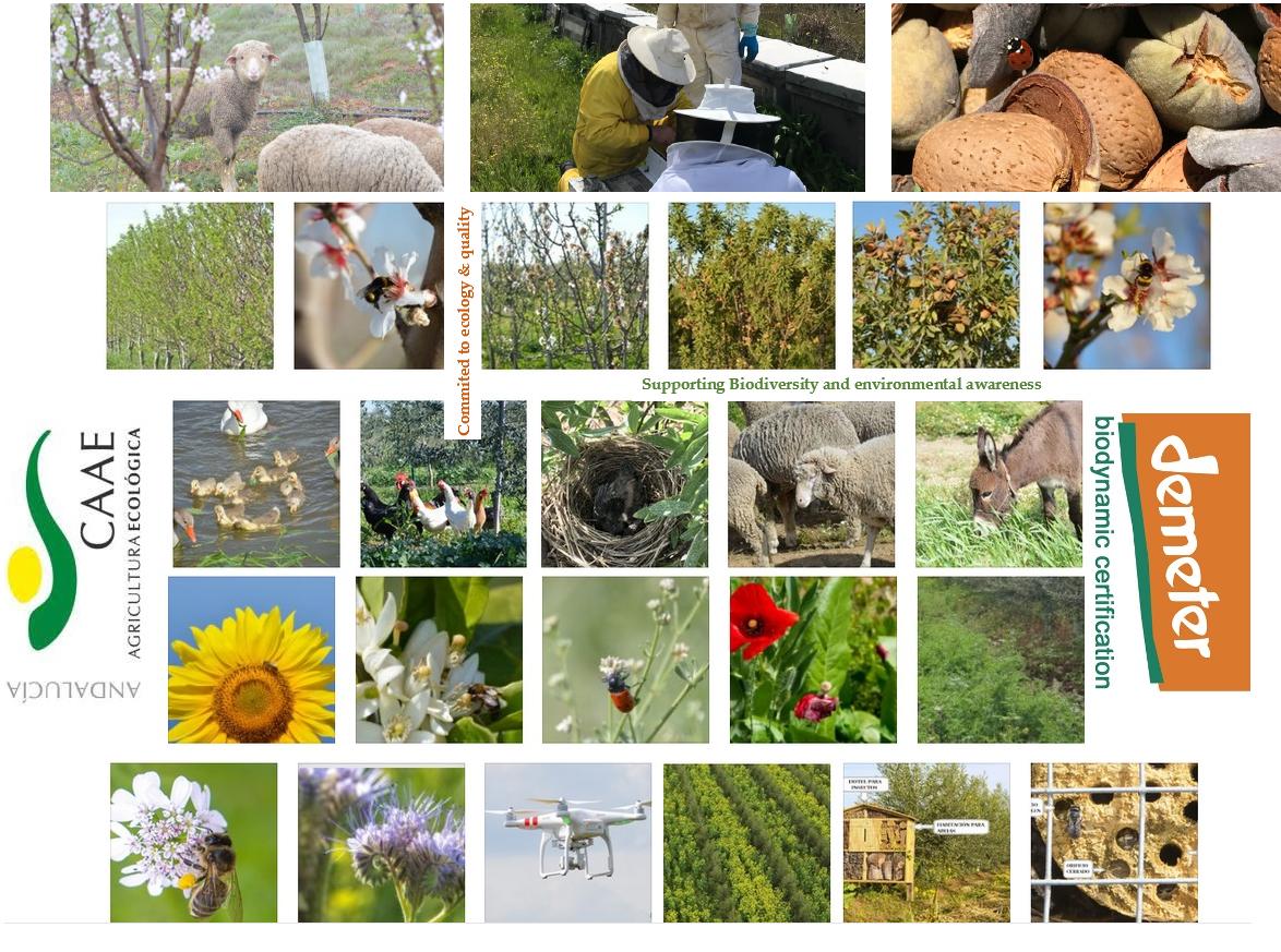Biodynamic & organic farm cortijo el puerto spain healing the earth