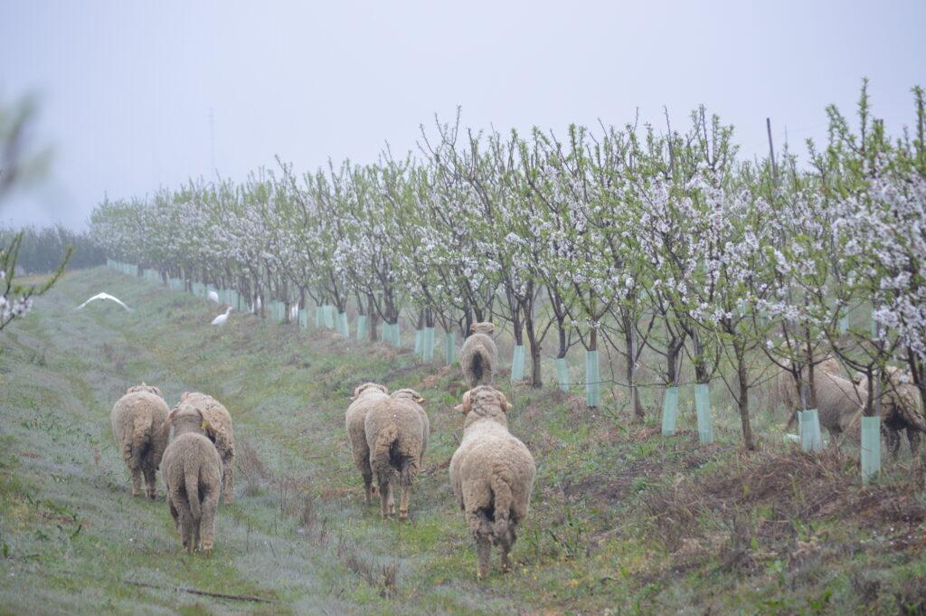 Biodynamic Farm cortijo el puerto spain Organic production