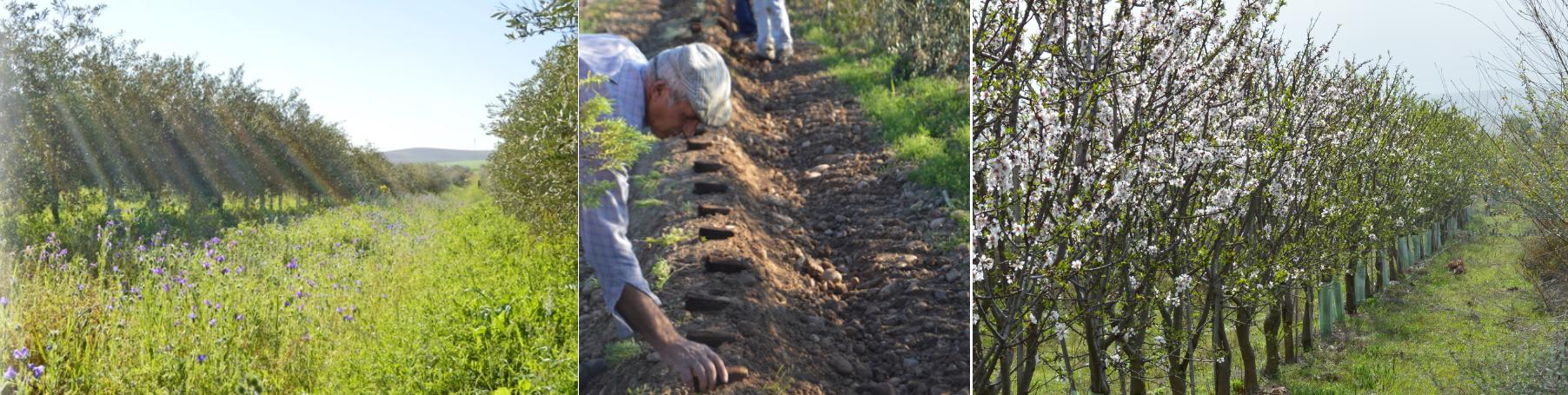 Biodynamic-organic-farm-cortijo-el-puerto-spain-healing-supporting-biodiversity-environmental-awareness