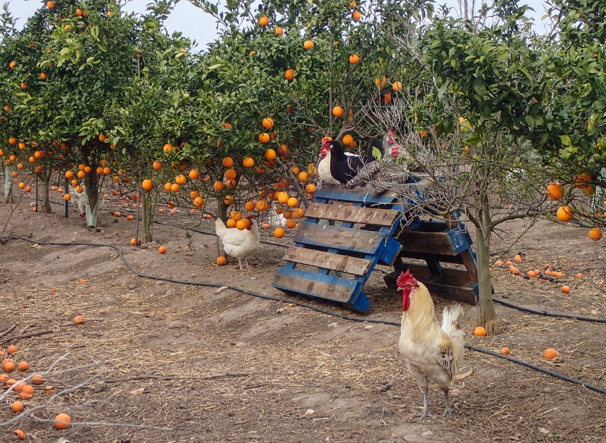 Organic livestock cortijo el Puerto biodynamic farm