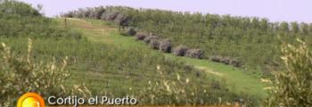 Agrosfera: Cortijo el Puerto Ecología e Innovación en Lora del Río