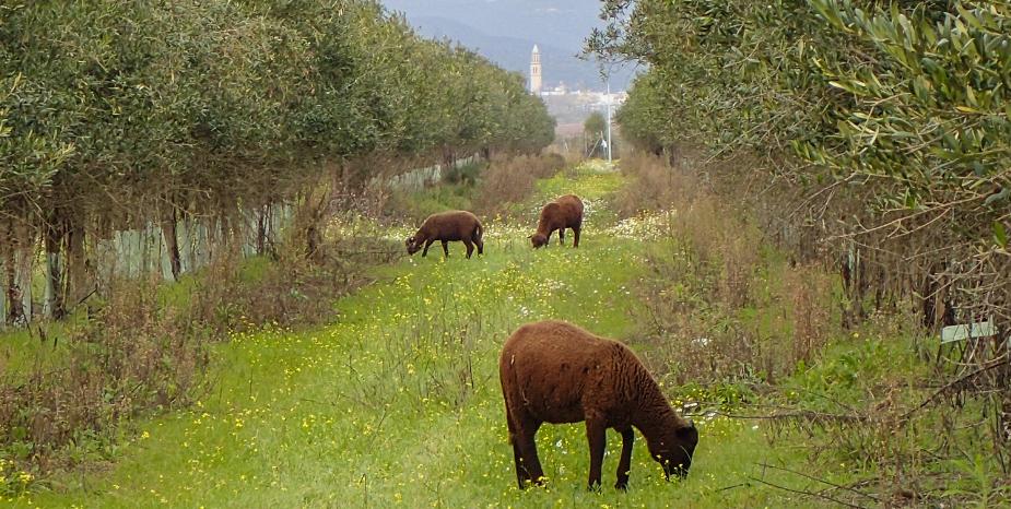 Viehzucht Demeter biodynamisch zertifikat cortijo el puerto Spanien