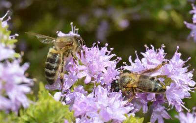 Cortijo El Puerto joins the World Bee Day