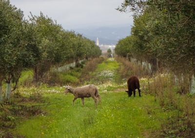 bio biodynamisch landwirtschaft cortijo el puerto
