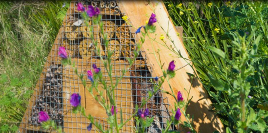 demeter biodynamische landwirtschaft öko bienen vielfalt artenschutz