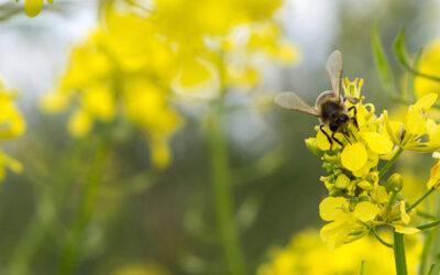 Cortijo el Puerto se suma al Día mundial de las abejas y polinizadores