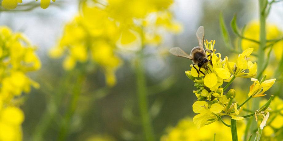 flora_abejas ecologico cortijo el puerto