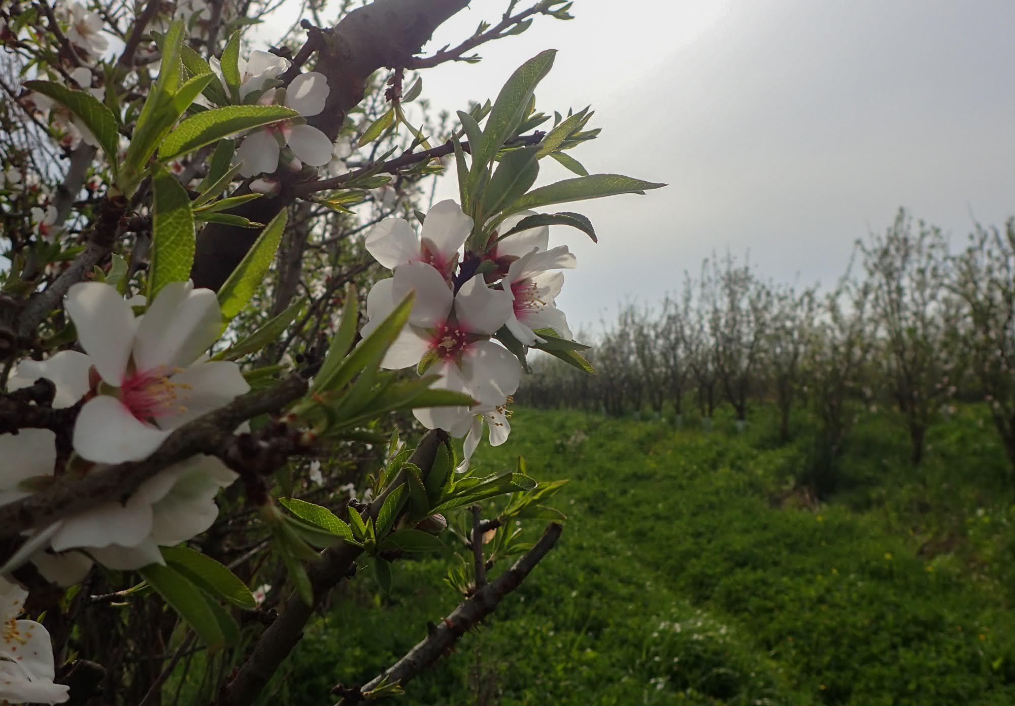 organic biodynamic almond bee biodiversity Cortijo el Puerto Spain
