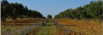 Mercacei: Tendencias de biodiversidad en los cultivos