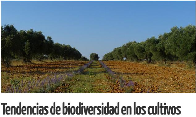 Mercacei_tendencias biodiversidad cultivos_31_08_2021 cortijo el Puerto eco biodinámico